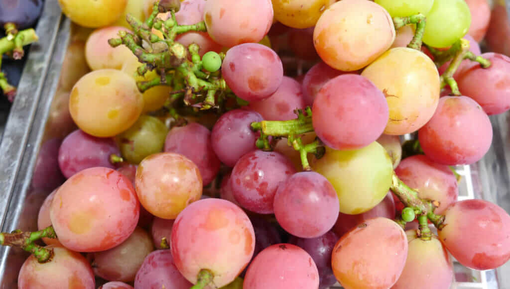 Aki Queen grape