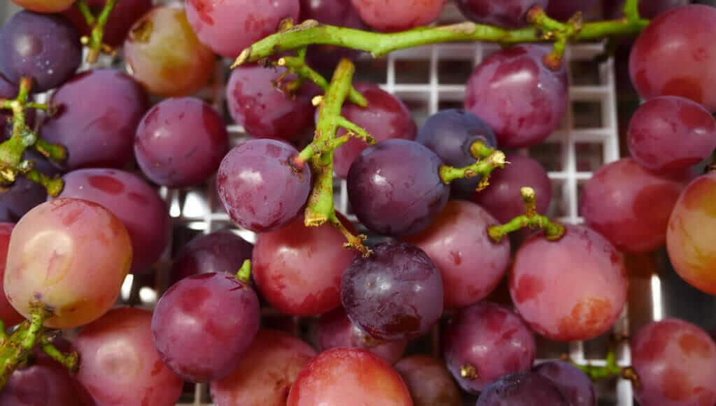 Queen Nina grapes